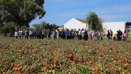 IA e IoT ao serviço da produção de tomate em Vila Franca de Xira